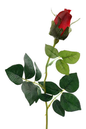 spurious: Single Red Rose