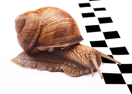 Snails racing photo