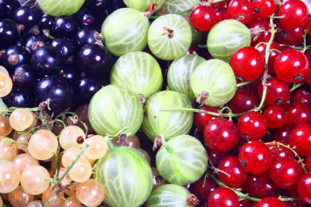 Fresh red, white, black currants and gooseberry close up photo