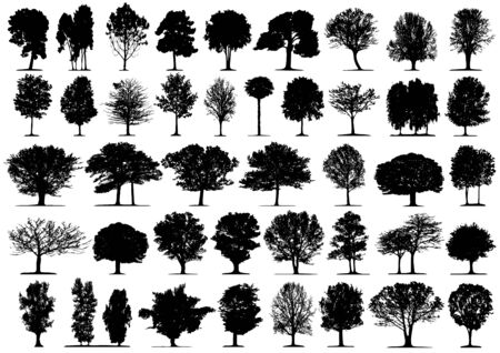 Black tree silhouettes on white background. Vector illustration.