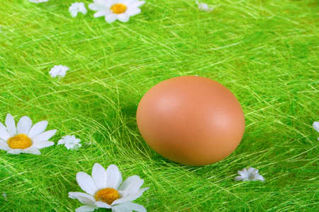 Easter Egg on green Grass with spring folwer Stock Photo - 3906273
