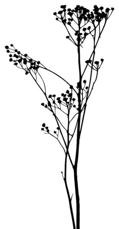 Vector plants silhouettes. This image is a vector illustration and can be scaled to any size without loss of resolution.