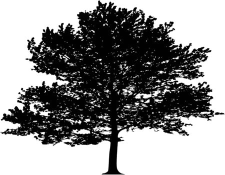 Vector tree. This image is a vector illustration and can be scaled to any size without loss of resolution
