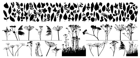 Big collection of different vector plants and leafs Illustration