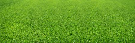 草の素敵な緑のフィールドの偉大なイメージ
