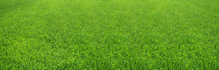 Great image of a nice green field of grass