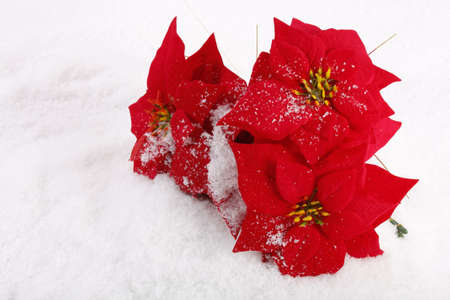 Christmas red poinsettias background over snowflake background  photo
