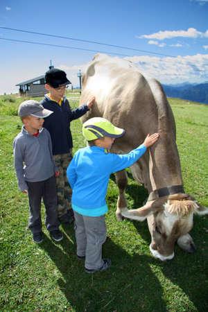 Young cow boys - Monte Baldo, Trentino, Italy photo