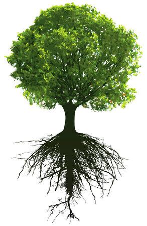 Bäume mit Wurzeln. Dieses Bild ist Illustration und kann auf jede beliebige Größe ohne Verlust der Auflösung skaliert werden.