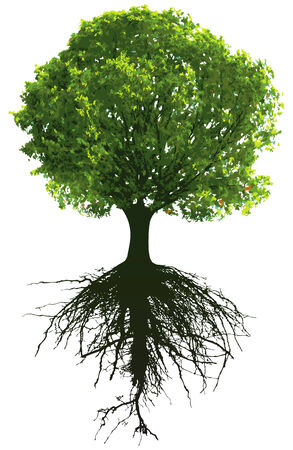 Trees with roots. This image is illustration and can be scaled to any size without loss of resolution. Illustration