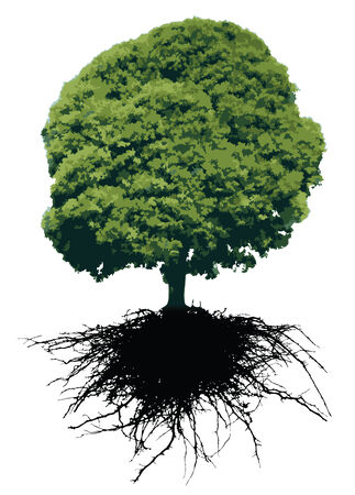 Bäume mit Wurzeln