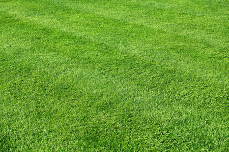 View of a healthy and and recently cut grass  Standard-Bild