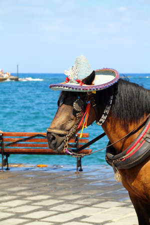 Close up photo of a horse's head with hat