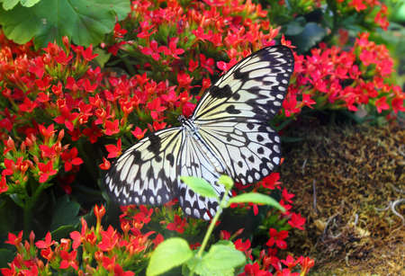 Butterfly on red flower - close up Stock Photo - 16159566