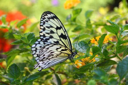 Butterfly on yellow flower - close up