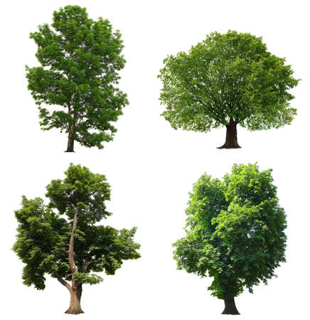 Bäume mit grünen Blättern isoliert auf weißem Hintergrund