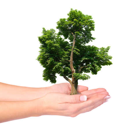 Hands and tree isolated on white background  Standard-Bild