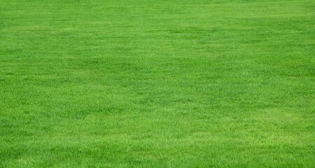 Lush green grass from a residential lawn