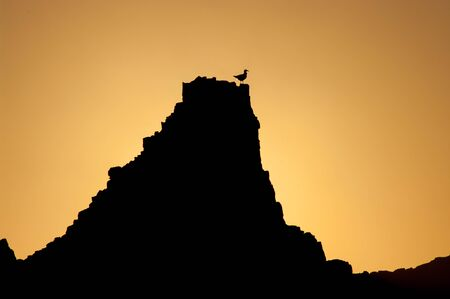 Gull perched on a rock at sunset.
