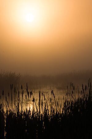 refuge: Foggy morning sunrise at a marsh with cattails. Finley National Wildlife Refuge, Willamette Valley, Oregon.
