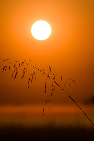 refuge: Sunrise with grass stalk in the  Willamette Valley. Finley National Wildlife Refuge, Oregon, USA.