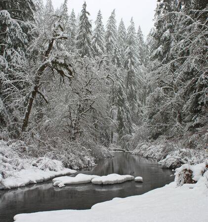 oregon cascades: Winter. North Fork Silver Creek.