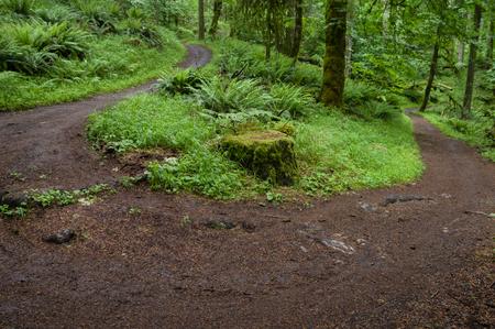 willamette: 180 degree turn on a trail. Willamette Valley, Oregon. Stock Photo