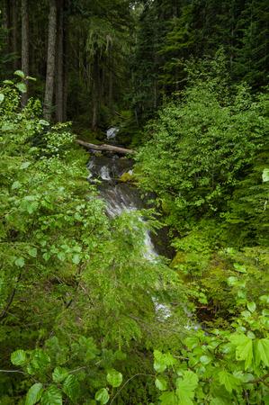 oregon cascades: Un-named waterfalls in the Oregon Cascades.