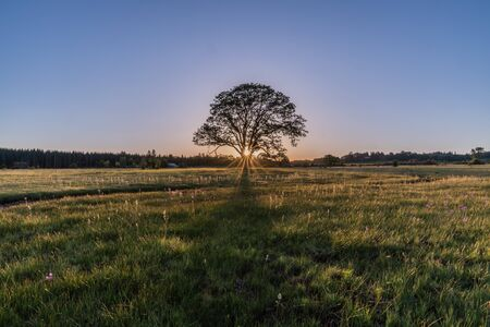 Sunrise through an Oregon White Oak at Kingston Praire Nature Preserve, Oregon