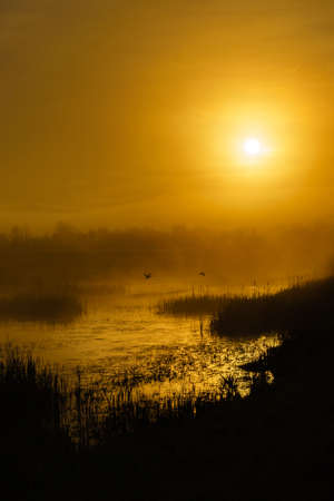 Ducks lift off a marsh at sunrise. Finley National Wildlife Refuge, Oregon Stock Photo