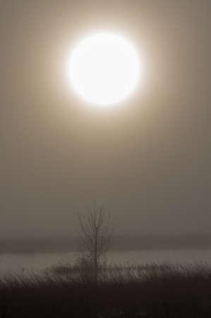 Sun rises over a marsh on a foggy morning. Finley National Wildlife Refuge, Oregon