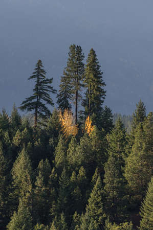 Fall colors in the Washington Cascade Mountains. Banque d'images