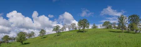 Oregon White Oak (Quercus garryana) hillside and clouds.