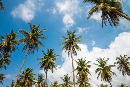 Coconut palm trees in sunny day with blue sky - Tropical summer breeze holiday Reklamní fotografie