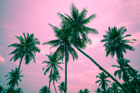 Coconut palm trees - Tropical summer breeze holiday, Color tone effect Stock fotó