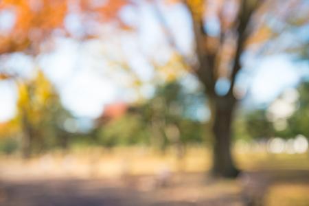 Abstract blur autumn season city park bokeh background