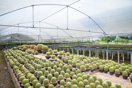 Beautiful cactus in flowerpot with sunlight 스톡 콘텐츠