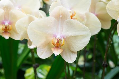 Beautiful white orchids Zdjęcie Seryjne