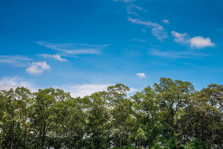 The tops of trees in forest againt blue sky with clouds background Banco de Imagens