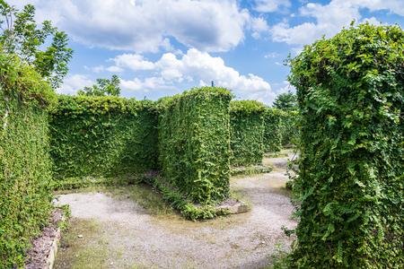 Green maze garden with blue sky