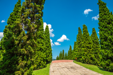 Beautiful pine tree and walkway in big park - Chiang mai, Thailand