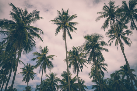 Coconut palm trees farm in Koh Mak island Thailand - Vintage filter effect style