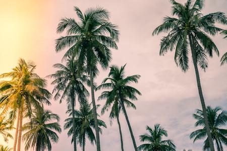 Coconut palm trees farm in Koh Mak island Thailand - Light leak effect 스톡 콘텐츠