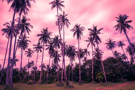 Coconut palm trees farm in Koh Mak island Thailand - Color fun tone
