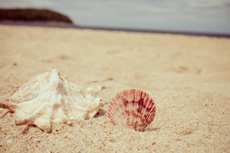 Seashell on sand beach - Selective focus & Retro filter effect Standard-Bild - 102807244