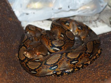 python the big hunter hide in rusty box