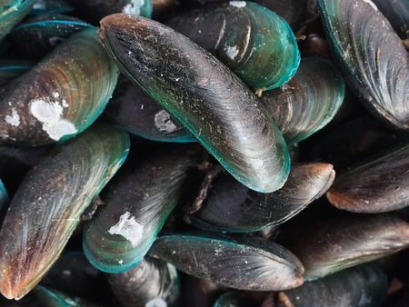 raw mussel before cleaning and cooking Stock fotó
