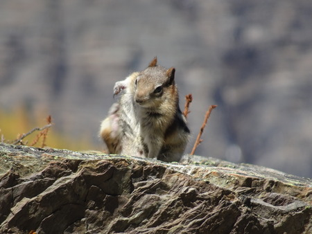 Chipmunk sitting on stone at Banff National Park in Alberta, Canada Foto de archivo