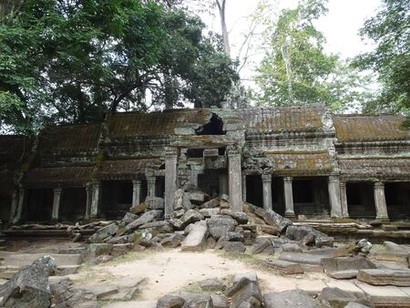 シェムリ アップ、カンボジアで Ta のプローム寺院で古代遺跡 写真素材