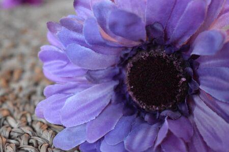 Lovely closeup of a violet flower blossom Фото со стока